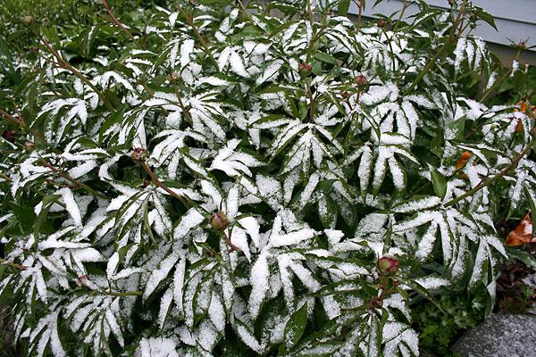 may snow