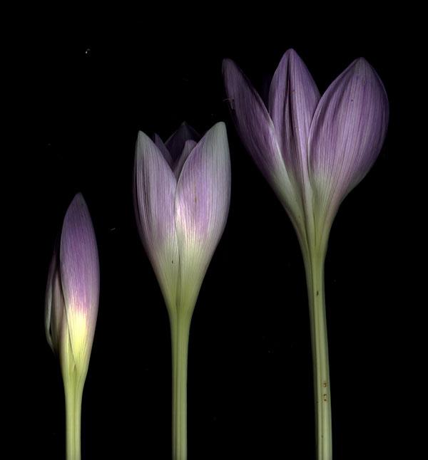 sept bloom day scans