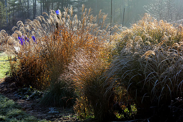 late fall grasses