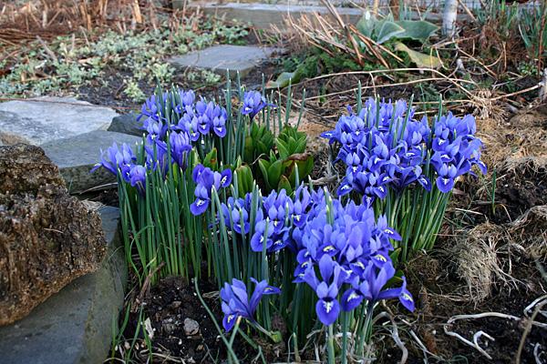fast forward spring