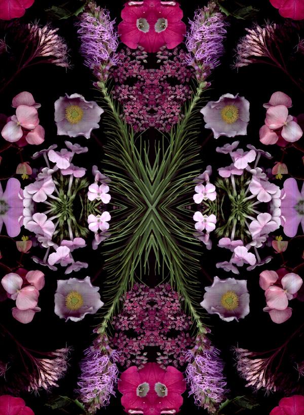 pink scans