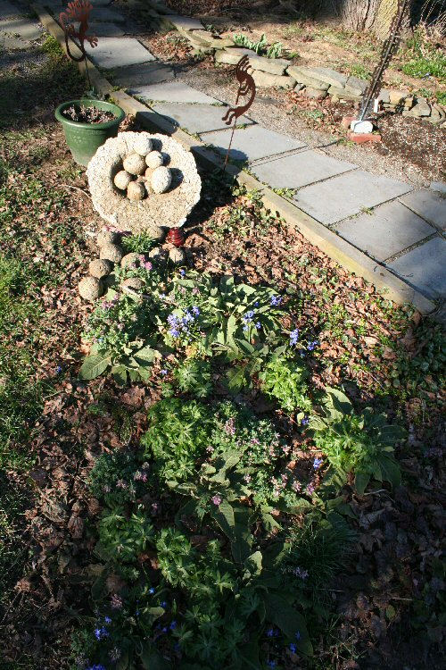 verbascum, ephemerals and spilled hypertufa