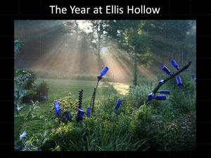 the year at ellis hollow