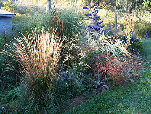 grasses, sun at back