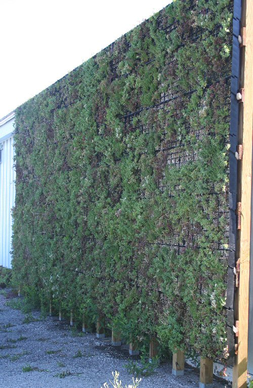 living wall finished