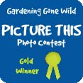 picture this photo contest gold