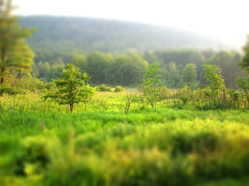 tilt shift trials