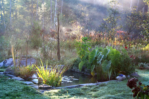 water garden, fall morning