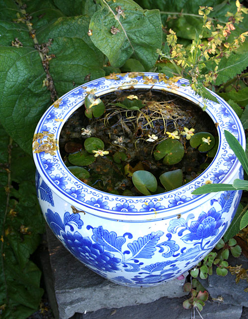 blue container water garden
