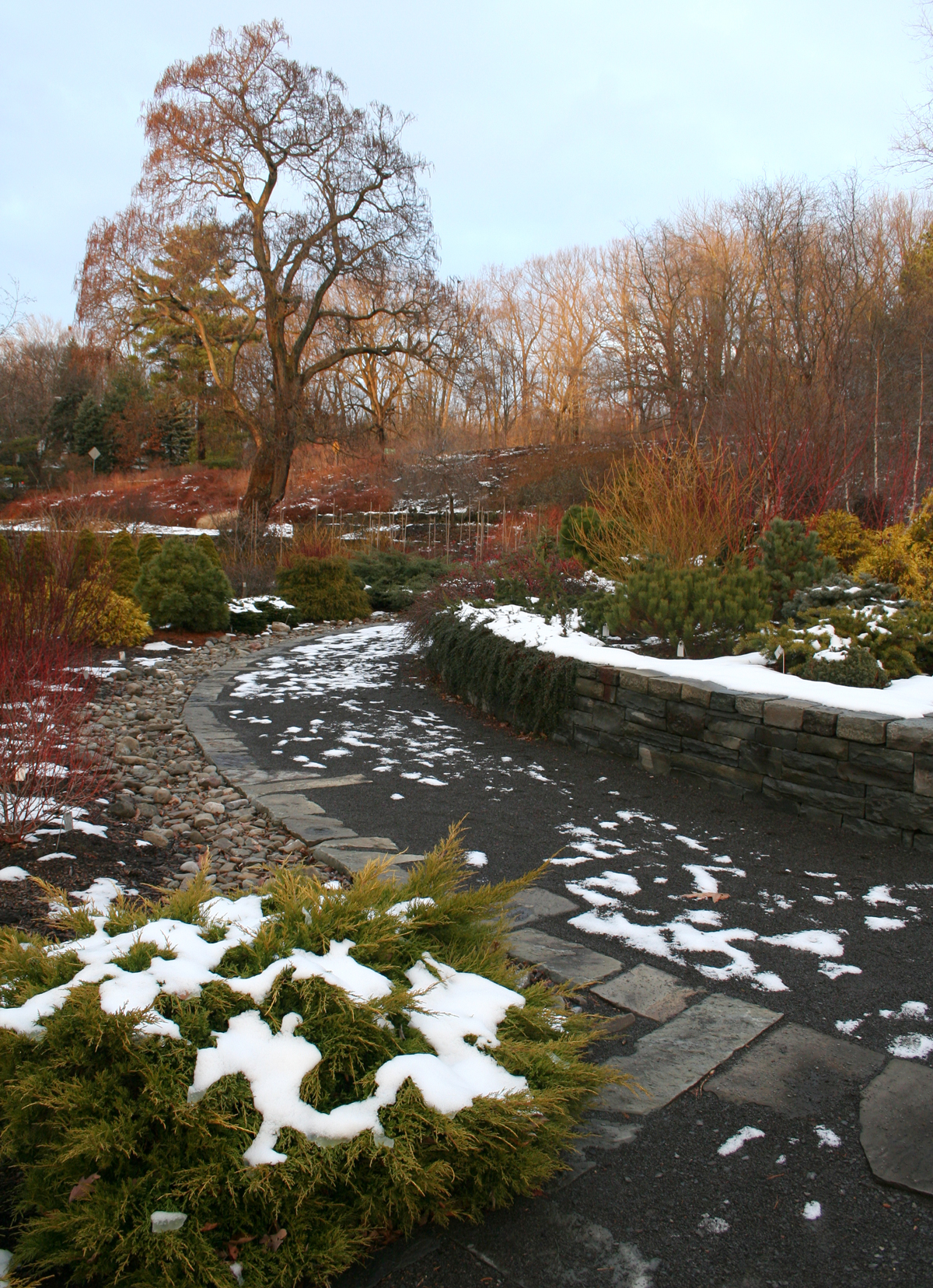 cornell plantations winter garden u2013 ellis hollow