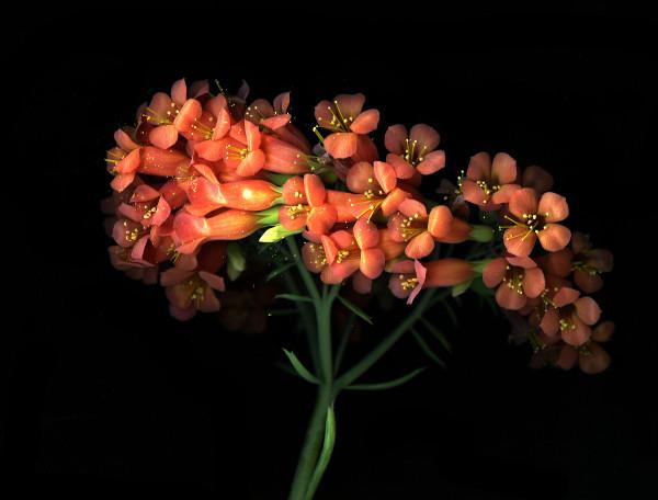 orange-succulent1x600