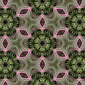 kale-wallpaper-detail